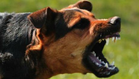 cachorro com raiva